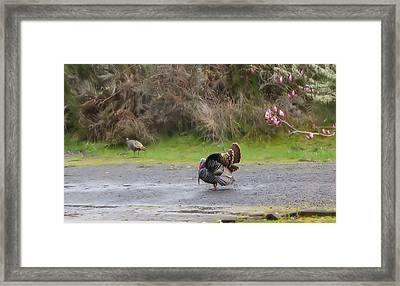 Framed Print featuring the photograph Strutting His Stuff by Katie Wing Vigil