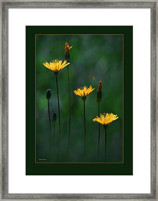 Summer Dining Framed Print by Ron Jones