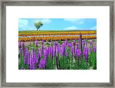 Summer In Hokkaido Framed Print by Frank Chen