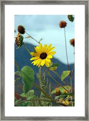 Summers End Framed Print
