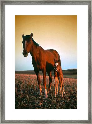 Sundown Framed Print by Jim Sauchyn