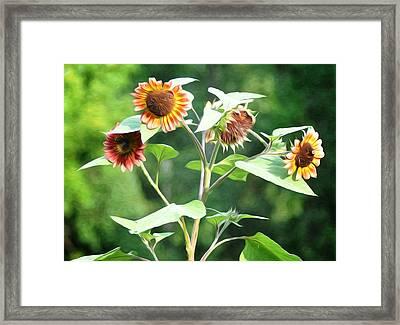 Sunflower Power Framed Print by Bill Cannon