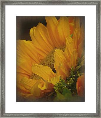 Sunflower Framed Print by Terry Eve Tanner