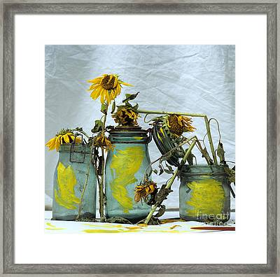 Sunflowers .helianthus Annuus Framed Print