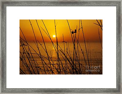 Sunset Framed Print by Carlos Caetano