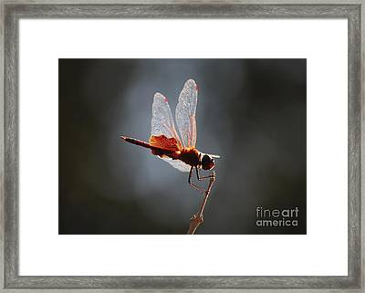 Superstar Framed Print by Carol Groenen