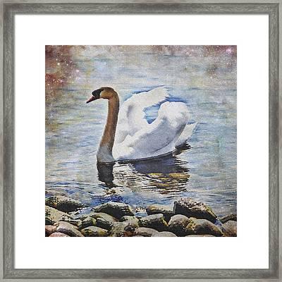 Swan Framed Print by Joana Kruse