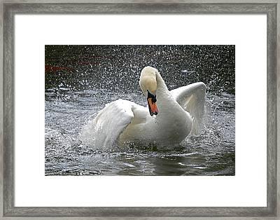 Swan Framed Print by Kathy Gibbons