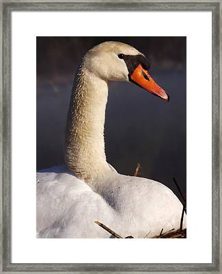 Framed Print featuring the photograph Swan Lake 1 by Gerald Strine