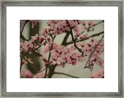 Sweet Spring Framed Print by Terrie Taylor