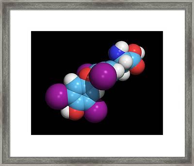 Synthetic Thyroid Hormone Molecule Framed Print by Dr Tim Evans