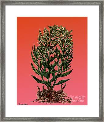 Tarragon, Perennial Herb Framed Print