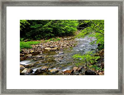 Tea Creek Monongahela National Forest Framed Print by Thomas R Fletcher