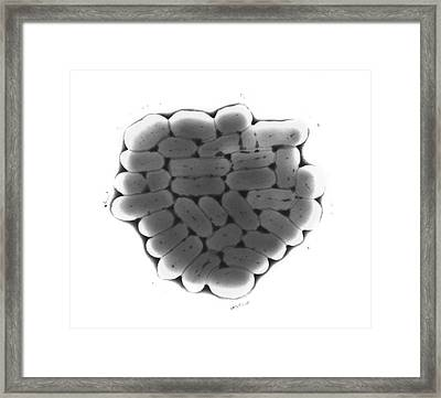 Tem Of Escherichia Coli 0111 Bacteria Framed Print