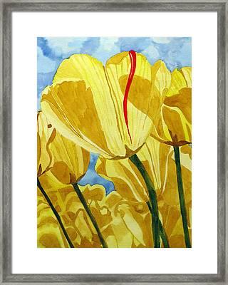 Tender Tulips Framed Print by Debi Singer
