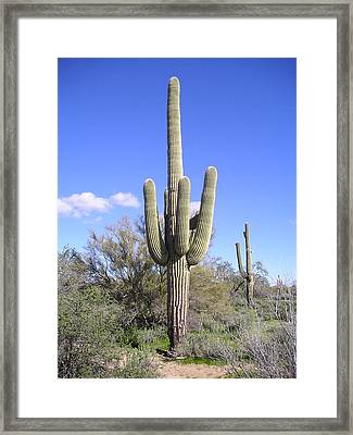 Test Of Time Framed Print by