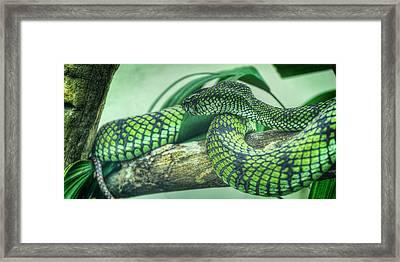 The Alert Green Snake Framed Print by Noah Katz
