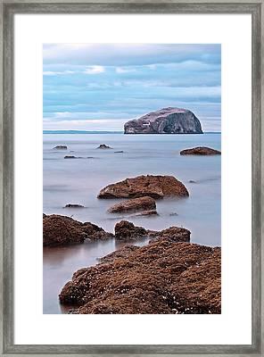 The Bass Rock Framed Print by Amanda Finan