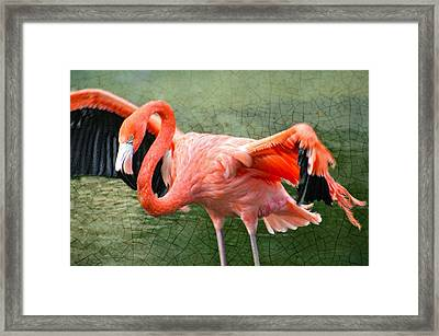 Framed Print featuring the photograph The Flamingo by Rosemary Aubut