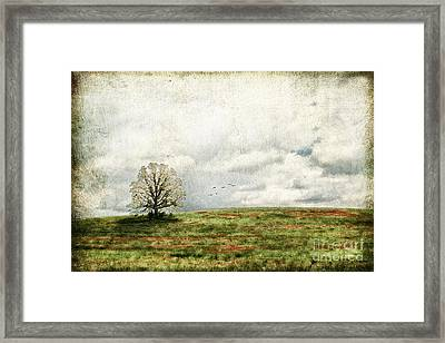 The Lone Tree Framed Print by Darren Fisher