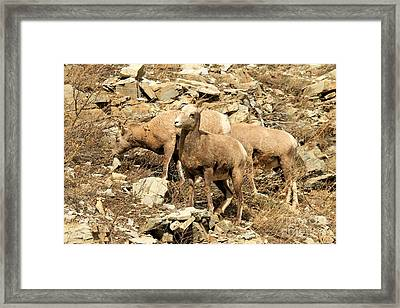 The Lookout Framed Print by Adam Jewell