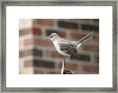 The Mocking Bird Framed Print by Rick Friedle