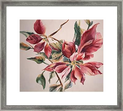 The Poinsettia Framed Print by Sharon K Wilson