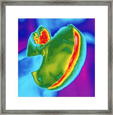 Thermogram Of A Hand Holding A Hamburger Framed Print