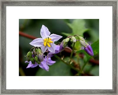 Thistle Flowers Framed Print by Paula Tohline Calhoun