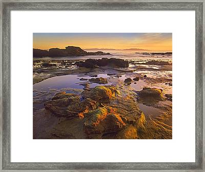 Tidepools Exposed At Low Tide Botanical Framed Print