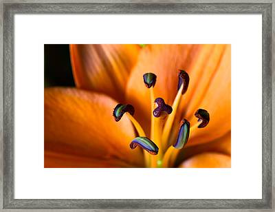 Tiger Lily Framed Print