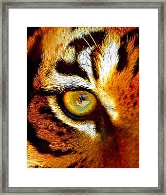 Tigers Eye Framed Print by Marlo Horne
