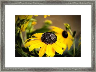 Time To Rise Framed Print by Gary Smith
