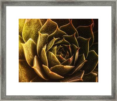 Timeless Framed Print by Mimulux patricia no No