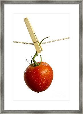 Tomato Framed Print by Blink Images