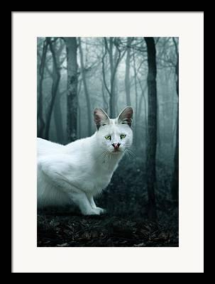 White Serval Framed Prints