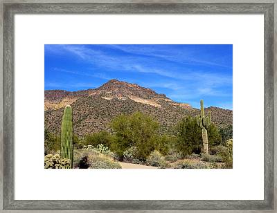 Tonto Forest Framed Print by David Rizzo
