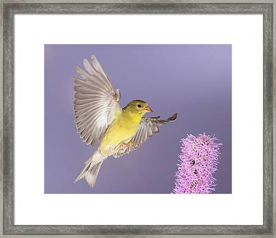 Touch Down Framed Print by Gerry Sibell