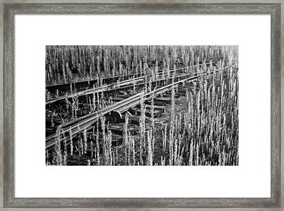 Framed Print featuring the photograph Tracks by Michael Nowotny