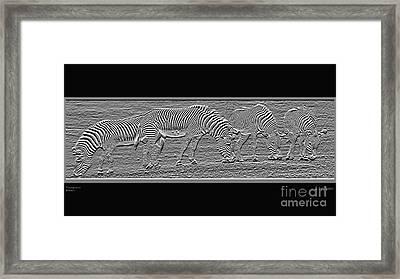 Transparent Zebra's Framed Print by Robert Meanor