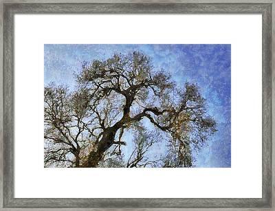 Tree Framed Print by Algimantas Gavenauskas
