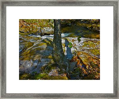 Tree And 3 Shadows Framed Print by George Ramos