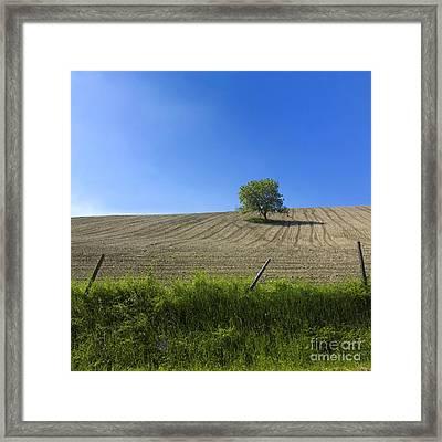 Tree  Framed Print by Bernard Jaubert