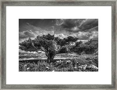 Tree In The Wind Framed Print