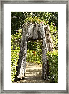 Tree Tunnel Framed Print by Blink Images