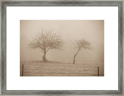 Trees In Fog Framed Print