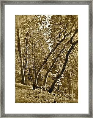 Trees On A Slope 2 Sepia Framed Print