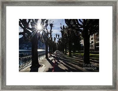 Trees On The Lakefront Framed Print