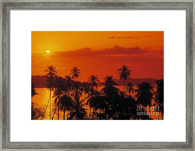 Tropical Beach Framed Print