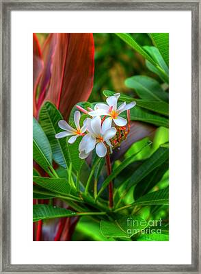 Tropical  Framed Print by Kelly Wade